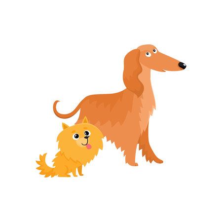 Couple of cute, funny dog characters - Afghan hound and Pomeranian spitz, cartoon vector illustration isolated on white background. Lovely Afghan hound and Pomeranian spitz characters, dog breeds Illustration