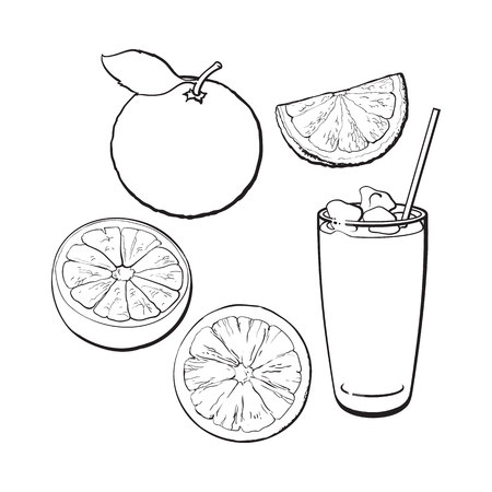 Set of whole, half, quarter grapefruit and glass of fresh juice with ice, black and white sketch style vector illustration on white background. Hand drawn whole and cut grapefruit and glass of juice