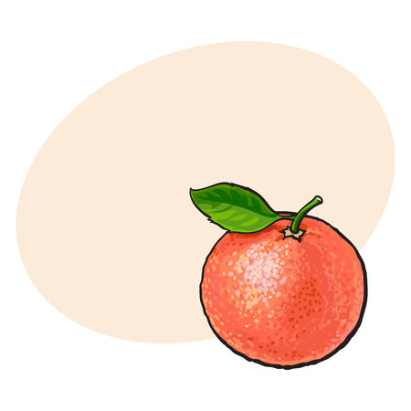 Whole shiny ripe pink grapefruit, red orange with a leaf, hand drawn sketch style vector illustration with space for text. Hand drawing of unpeeled round whole grapefruit with fresh green leaf