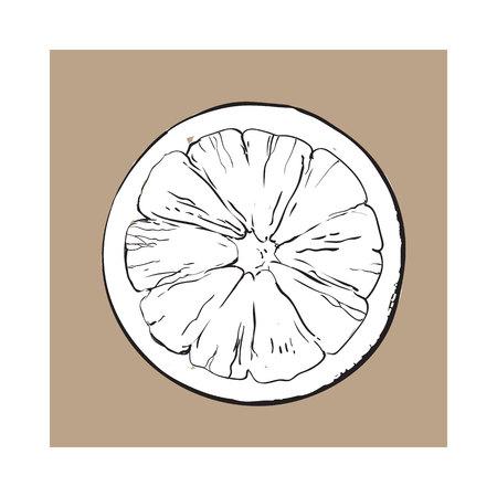 segmento: Vista superior rebanada redonda, mitad de pomelo maduro, naranja, blanco y negro boceto estilo ilustración vectorial sobre fondo marrón. Pomelo dibujado a mano cortado por la mitad, rebanada redonda Vectores