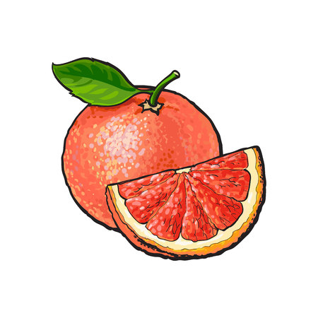 Whole and quarter piece of unpeeled ripe pink grapefruit, sketch style vector illustration on white background. Hand drawn whole juicy grapefruit fruit with fresh green leaf and qurter piece
