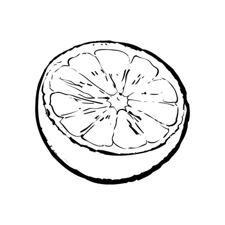Half of lime, hand drawn sketch style vector illustration on white background. Hand drawing of unpeeled lime cut in half Ilustração