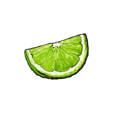 Quarter, segment, piece of ripe green lime, hand drawn sketch style vector illustration on white background. Hand drawing of unpeeled grapefruit qurter, piece Ilustração