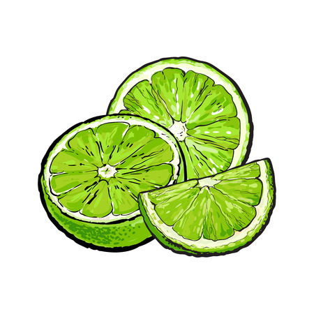 Unpeeled green lime halves and pieces, hand drawn sketch style vector illustration on white background. Hand drawing of unpeeled lime, half, quarter, side view Illustration