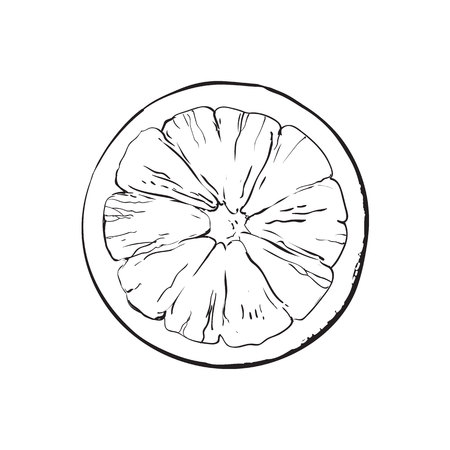 Top view round slice, half of ripe grapefruit, orange, black and white sketch style vector illustration on white background. Hand drawn grapefruit cut in half, round slice