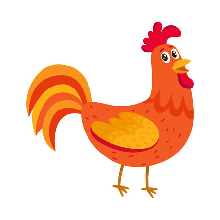 Cute and funny colorful farm rooster, chicken, cock, cockerel, cartoon vector illustration isolated on white background. Cute cartoon, comic style red and orange farm rooster, chicken