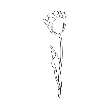 Hand van zijaanzicht zwart-witte open tulpenbloem, de vectorillustratie die van de schetsstijl op witte achtergrond wordt geïsoleerd getrokken die. hand tekening van tulp bloem, decoratie-element