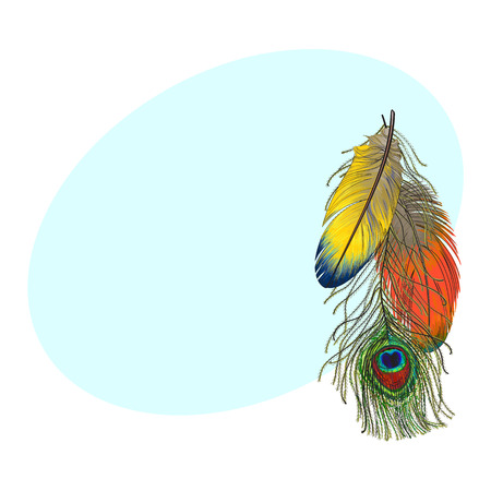 Hand getrokken set van kleurrijke vogel veren, papegaaien en peacock, schets stijl vectorillustratie met ruimte voor tex. Stockfoto