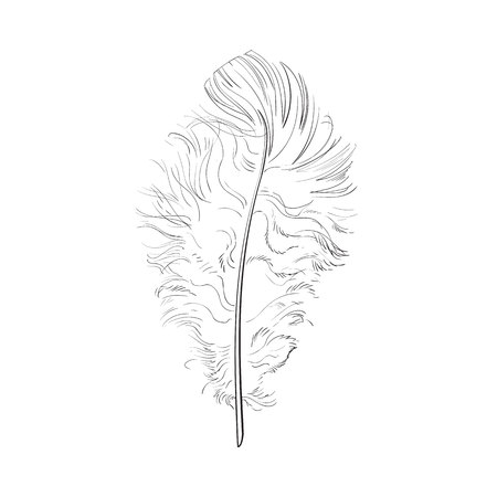Hand drawn tender, fluffy black and white bird feather, sketch style vector illustration on white background. hand drawing of scarlet, tender feather Stock Photo