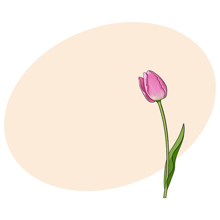 Hand drawn of side view pink tulip flower, sketch style vector illustration with space for tex. Realistic hand drawing of tulip flower, decoration element