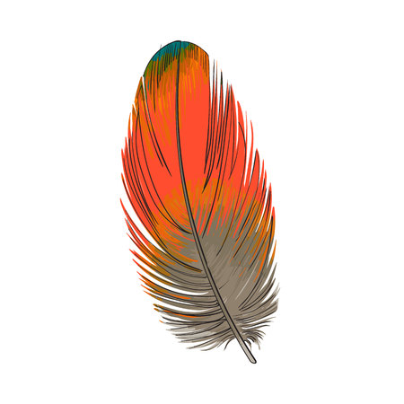 Hand drawn smoth orange tropical, exotic bird, parrot feather, sketch style vector illustration on white background. Realistic hand drawing of orange parrot, bird feather