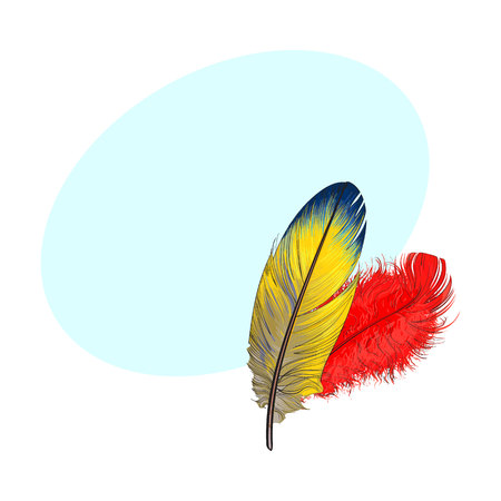 Two hand drawn smoth orange and yellow tropical, exotic bird, parrot feathers, sketch style vector illustration with space for tex. Realistic hand drawing of yellow and orange parrot, bird feathers