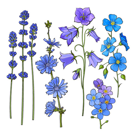 Set of hand drawn blue flowers - lavender, forget me not, bell, cornflowers, sketch style vector illustration isolated on white background. Realistic hand drawing of blue meadow flowers Ilustração
