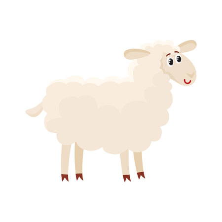 Well gromed fluffy sheep, lamb with big eyes, cartoon vector illustration isolated on white background. Cute and funny farm sheep, lamb with friendly face and big eyes