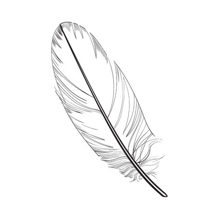 Hand drawn smoth, black and white tropical, exotic bird feather, sketch style vector illustration on white background. Realistic hand drawing of parrot, bird feather