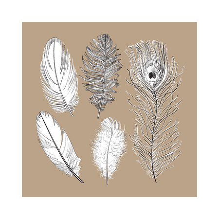 Hand drawn set of various black and white bird feathers, sketch style vector illustration on brown background. Иллюстрация