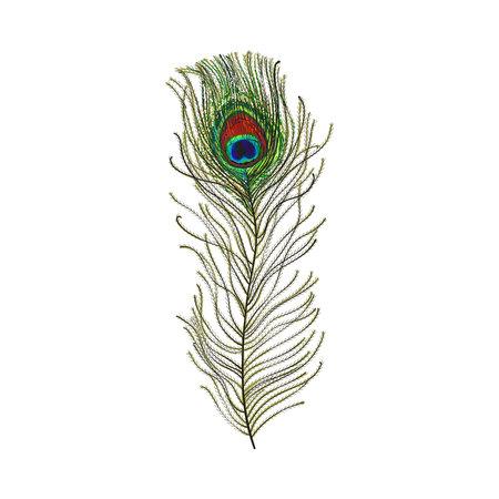 Plume d'oiseau queue de paon dessiné main, croquis illustration vectorielle de style sur fond blanc. Dessin réaliste à la main de la belle plume d'oie piquée de paon oeil Banque d'images - 78964695