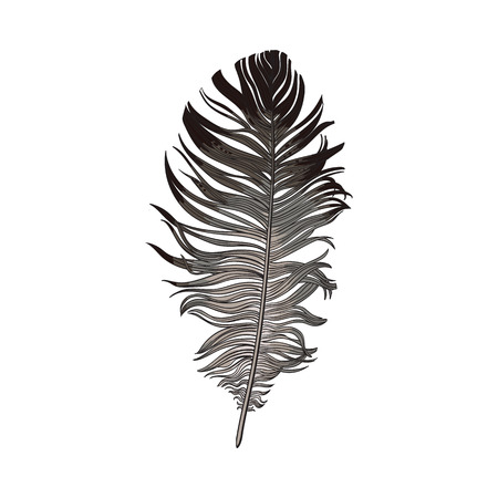 Hand drawn smoth black and grey dove bird feather, sketch style vector illustration on white background. Realistic hand drawing of grey bird feather Stock Photo
