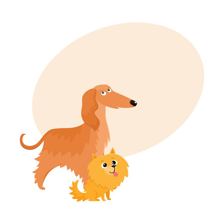 longhaired: Couple of cute, funny dog characters - Afghan hound and Pomeranian spitz, cartoon vector illustration with space for text. Lovely Afghan hound and Pomeranian spitz characters, dog breeds