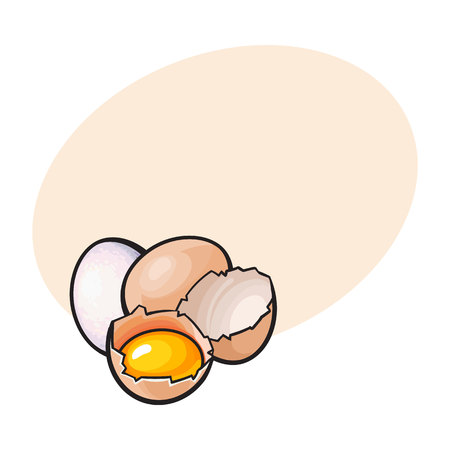Whole and cracked, broken chicken egg with yolk inside, sketch style vector illustrationwith space for textHand drawn, sketched raw, uncooked chicken eggs, whole and broken