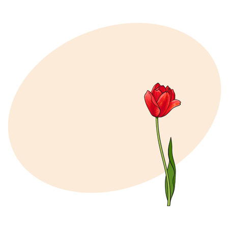 ide: Hand drawn of side view red open tulip flower, sketch style vector illustration with space for tex. Realistic hand drawing of tulip flower, decoration element