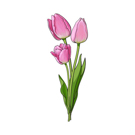 Hand drawn bunch of three side view pink tulip flower, sketch style vector illustration isolated on white background. Realistic hand drawing of three tulip flower bouquet, decoration element Ilustracja