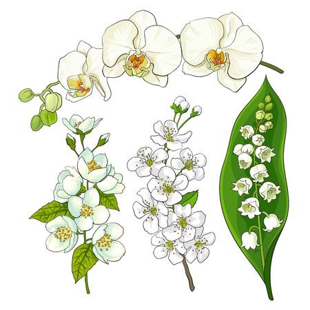 白い花セット - スズラン、蘭、リンゴとサクラの花、孤立したスケッチのベクトル図です。リアルな手描きの白い花、スズラン、蘭、アップル、桜