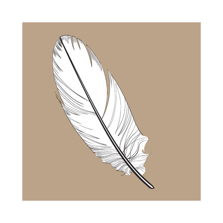 Hand drawn smoth, black and white tropical, exotic bird feather, sketch style vector illustration on brown background. Realistic hand drawing of parrot, bird feather