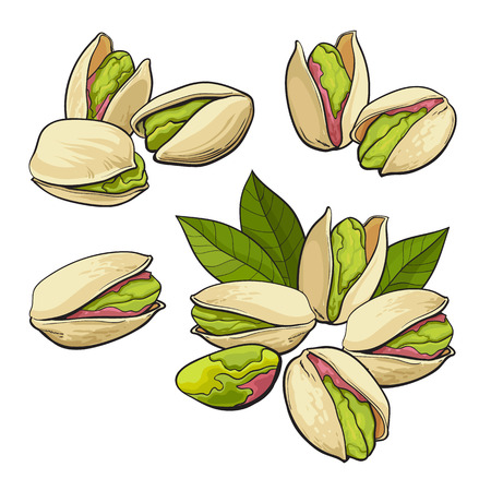 Set of pistachio nuts, single and grouped, sketch style vector illustration isolated on white background. Realistic hand drawing of pistachio nuts, single, pair, groups of three and four Illustration