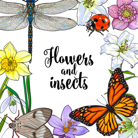 springtime: Square frame of summer insects and flowers with place for text, sketch vector illustration isolated on white background. Hand drawn summer flowers, butterfly, moth, dragonfly as square frame