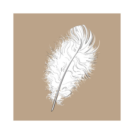 Hand drawn tender, fluffy black and white bird feather, sketch style vector illustration on brown background. hand drawing of scarlet, tender feather