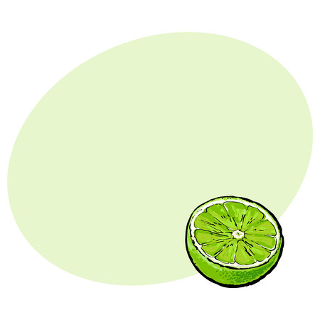Half of green lime, hand drawn sketch style vector illustration with space for text. Hand drawing of unpeeled lime cut in half Ilustração