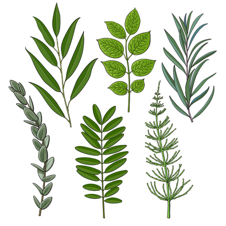 Set of tree twigs, branches with fresh green leaves, summer season decoration elements, sketch vector illustration isolated on white background. Hand drawn green foliage, twigs, branches with leaves Vectores