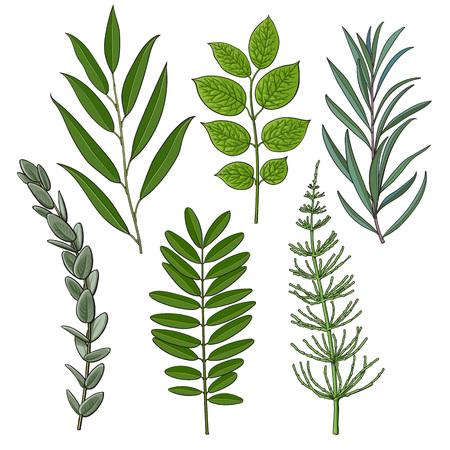Ensemble de brindilles d'arbres, branches avec des feuilles vertes fraîches, éléments de décoration de saison estivale, illustration vectorielle de croquis isolé sur fond blanc. Feuillage vert dessiné à la main, brindilles, branches avec des feuilles
