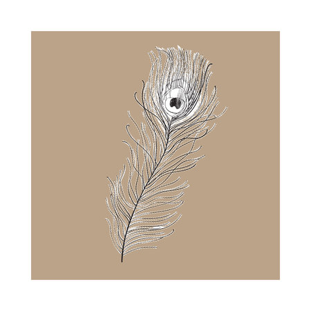 Hand drawn peacock tail bird feather, sketch style vector illustration on brown background. Realistic hand drawing of beatiful peacock eye spotted tail quill feather Stock Vector - 80538529