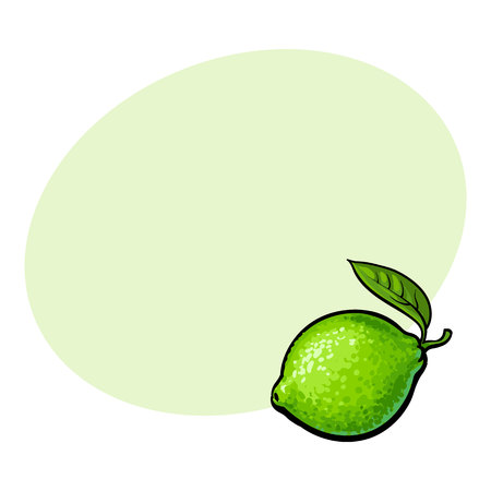 Whole shiny ripe green lime with a leaf, hand drawn sketch style vector illustration with space for text. Hand drawing of unpeeled round whole lime with fresh green leaf