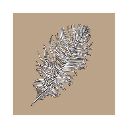 손으로 그려 부드러운 된 흑백 비둘기 조류 깃털, 갈색 배경에 스타일 벡터 일러스트 스케치합니다. 일러스트