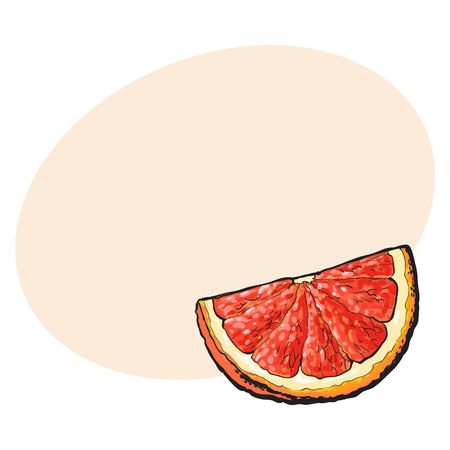 Quarter, segment, piece of ripe pink grapefruit, red orange, hand drawn sketch style vector illustration with space for text. Hand drawing of unpeeled grapefruit qurter, piece