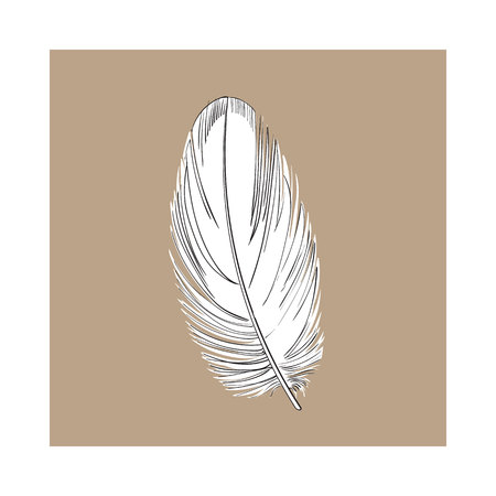 Hand drawn smoth black and white tropical, exotic bird, parrot feather, sketch style vector illustration on brown background. Realistic hand drawing of parrot, bird feather Illustration