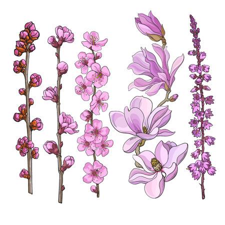 Conjunto de flores rosadas dibujadas a mano - magnolia, manzana y flor de cerezo, brezo, dibujo ilustración vectorial aislado sobre fondo blanco. Dibujo a mano realista de ramitas ramas tallos con flores rosadas Ilustración de vector