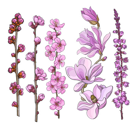 Set of hand drawn pink flowers - magnolia, apple and cherry blossom, heather, sketch vector illustration isolated on white background. Realistic hand drawing of twigs branches stems with pink flowers