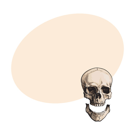 Hand drawn human skull, anatomical model with separated lower jaw, jawbone, sketch style vector illustration with space for text. Realistic hand drawing of human skull with separated jawbone Illustration