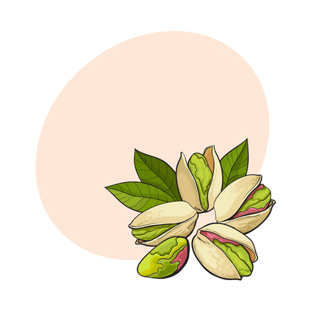 Group of pistachio nuts, shelled and unshelled, sketch style vector illustration with space for text. Realistic hand drawing of pistachio nuts with leaves
