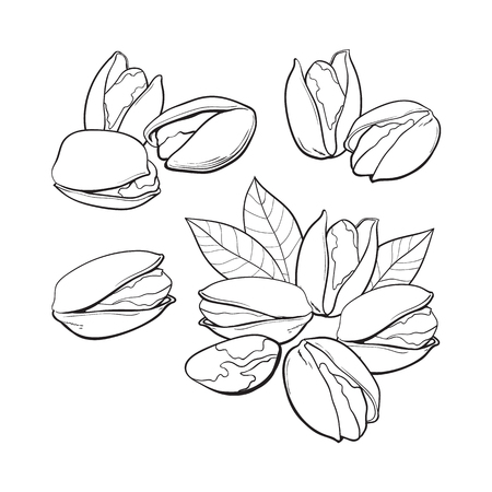 Set of black and white pistachio nuts, single and grouped, sketch style vector illustration isolated on white background.