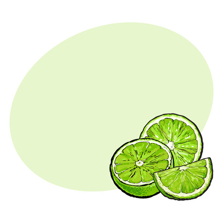 Unpeeled green lime halves and pieces, hand drawn sketch style vector illustration with space for text. Hand drawing of unpeeled lime, half, quarter, side view