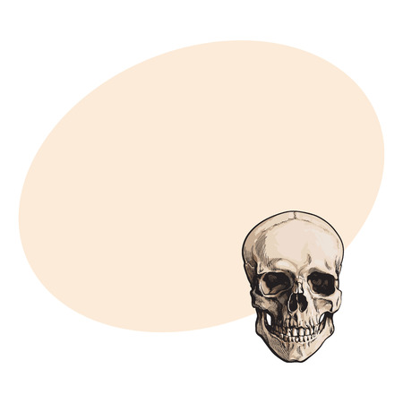 Hand drawn human skull, anatomical model, sketch style vector illustration with space for text. Realistic front view hand drawing of human skull