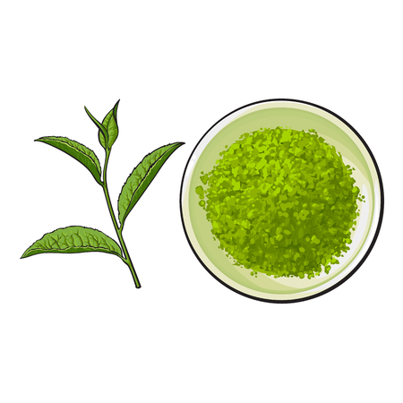 Hand drawn bowl of matcha powder and green tea leaf, sketch style vector illustration isolated on white background. Realistic hand drawing of matcha powder in white bowl and green tea leaf Ilustração