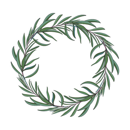 Wreath of hand drawn melaleuca twigs, branches, decoration element with place for text, sketch vector illustration isolated on white background. Иллюстрация