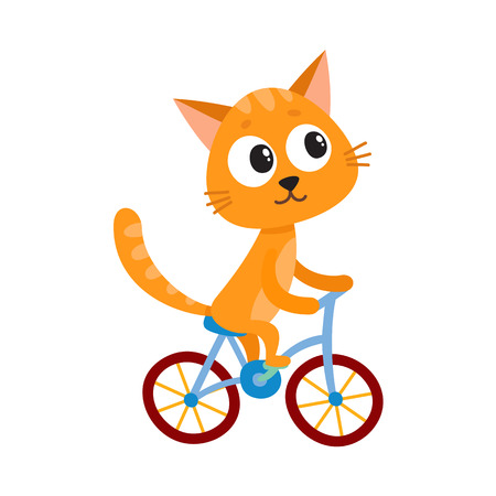 Cute little cat, kitten character riding bicycle, cycling, cartoon vector illustration isolated on white background. Little baby cat, kitten animal character riding bike, bicycle, cycling happily