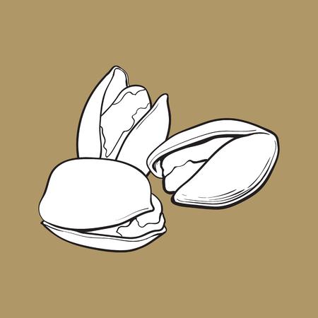 Gruppo di dadi di pistacchio in bianco e nero, sgusciate e senza guscio, illustrazione vettoriale di stile di schizzo isolato su sfondo marrone. Realistico disegno a mano di pistacchi Archivio Fotografico - 81792181